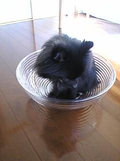 犬ボール2.jpg