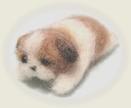 シーズーの子犬2