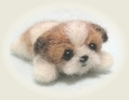 シーズーの子犬1
