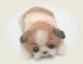 シーズーの子犬3