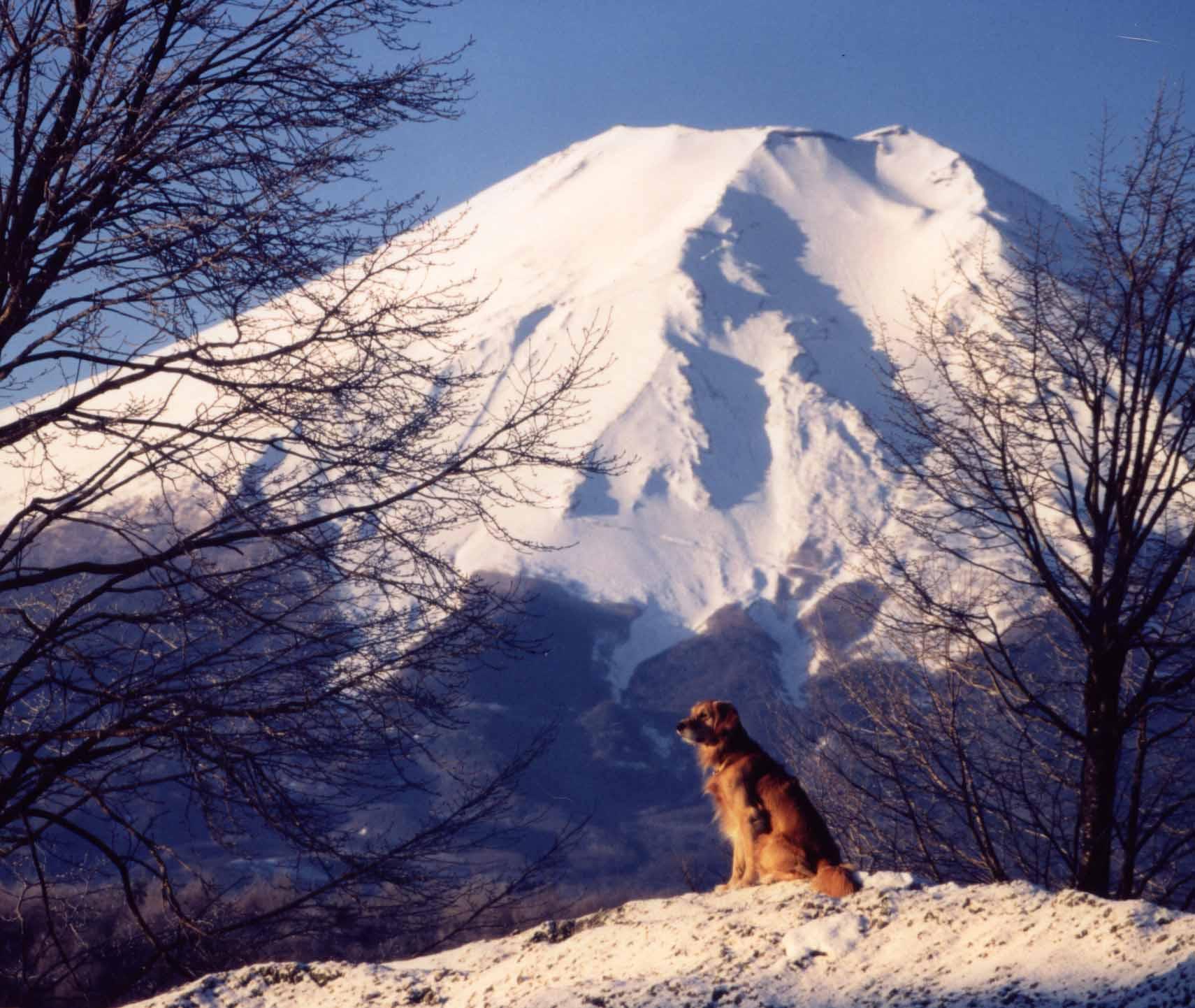 富士をバックに朝日を浴びる