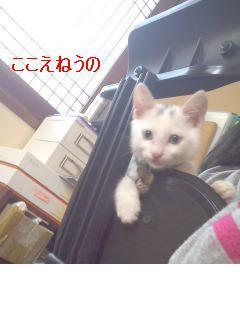 16_20071220145042.jpg