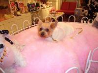 ピンクのソファにうずまるシャロン