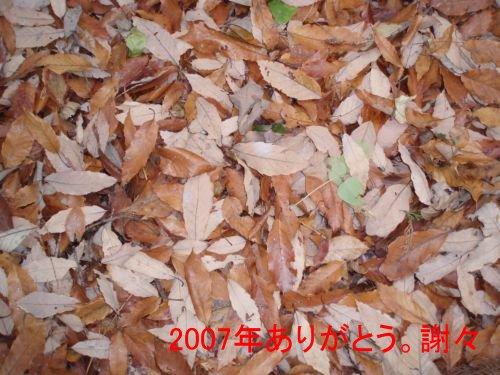 コピー (2) ~ PC310011