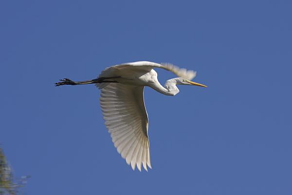 bird_2665.jpg