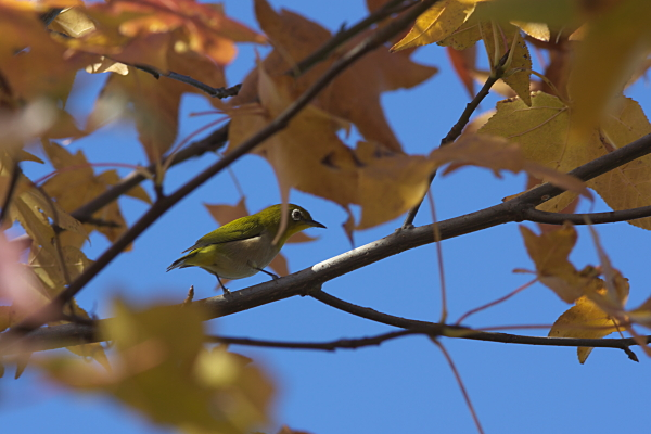 bird_2715.jpg