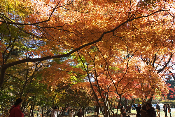 nagatoro_2901.jpg