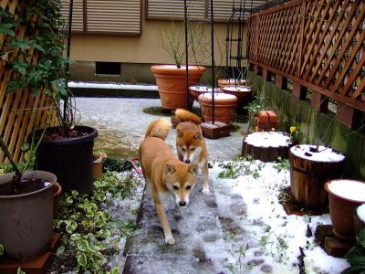 お庭にも雪じゃよ~。