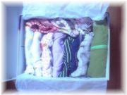 モモの衣装箱