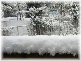 今年初めての雪