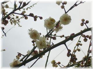 ちょとだけ咲いた梅の花