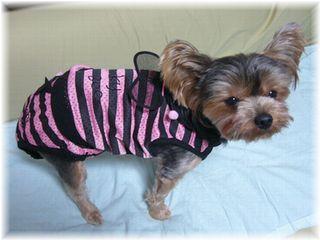 ハチさんの服