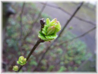 春のつぼみ♪