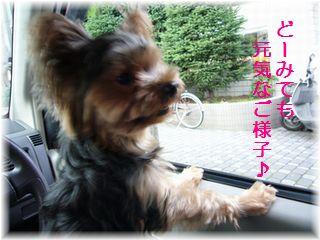 どうみても元気(⌒-⌒;) ・・・・