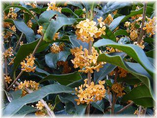 秋の花-1
