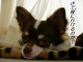 SANY5725_20071210171617.jpg