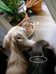 SANY7680_20071221153938.jpg