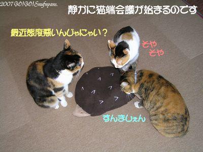 猫端会議が始まります