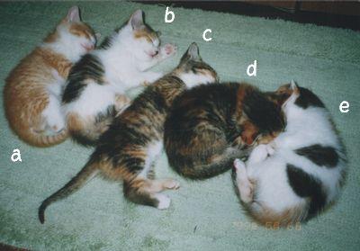 5匹の仔猫