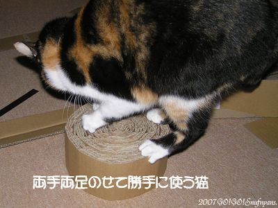 よそ猫さんのなのに・・・