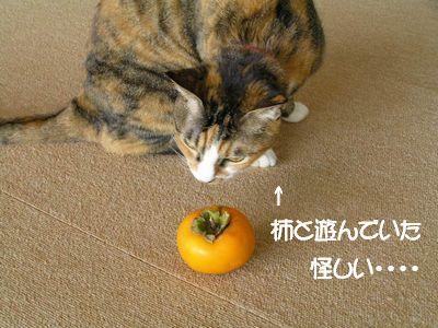 柿と遊んでいたタカ君