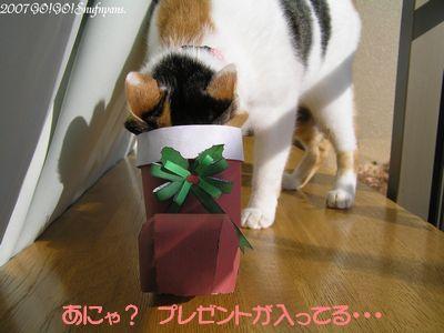 あにゃ! プレゼントが入ってる!!