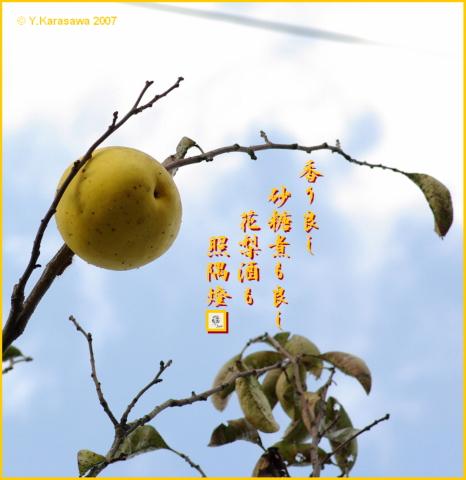 1121花梨