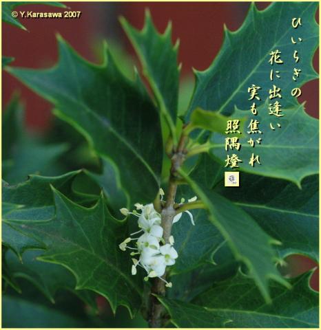 1127柊の花