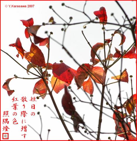 1130花水木の紅葉