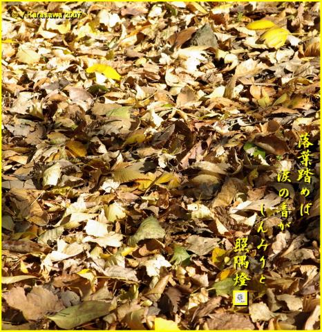 1202落葉の絨毯