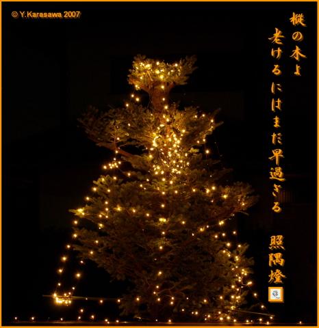 1218樅の木