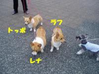 三匹コギ親子・レナ&ラフ&トッポ