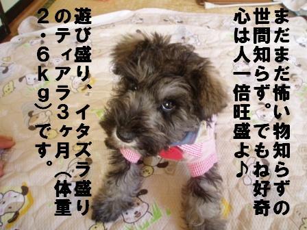 イタズラ大魔王現る!!!