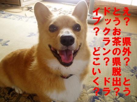 yorokobi.jpg