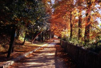 紅葉が見事な並木道です