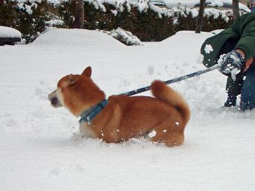 雪・・・気持ちいい!