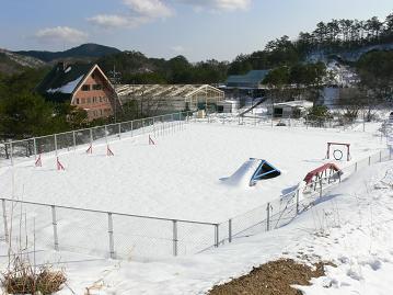 雪のドックラン