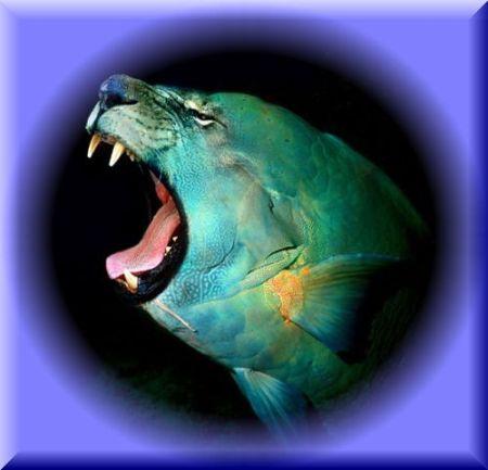 ライオン魚