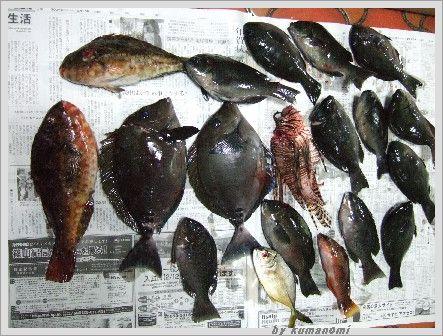 2008初釣り