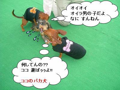 19.11.9遊び1 (6)