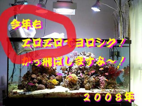20080102newyear2.jpg