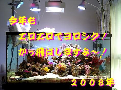 20080102newyear.jpg