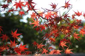 秋色ー3-