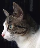 天真爛漫、永遠の子猫?ジェリー。 名前の由来は、俳優のジェラルド・バトラーの愛称