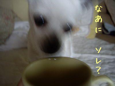 20070528145254.jpg