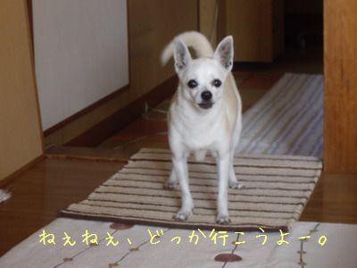 20070807143706.jpg