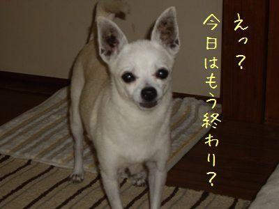 20070830230846.jpg