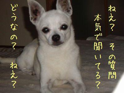 20070919113035.jpg