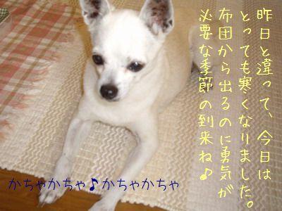 20070929155127.jpg