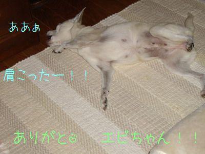 20070929160059.jpg